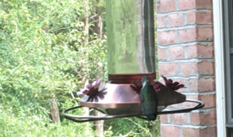 Hummingbird Food for Feeder